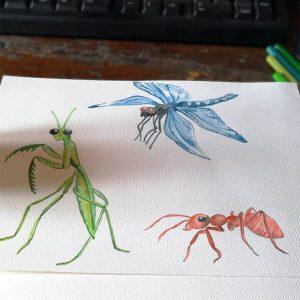 Faboola, tavole disegnate a mano: alcuni insetti